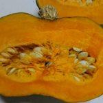 家庭菜園 冬野菜の収穫と保存、自家製カボチャの変化にビックリ!その味は?