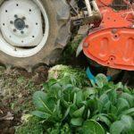 春の家庭菜園。夏野菜植え付け準備!野菜の収穫と土づくり、今年の夏は何を作ろうかな