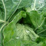 ゴールデンウィーク前半の家庭菜園は雨続き。弦ありインゲン、長ナスの植え付けと種のまき直し色々。
