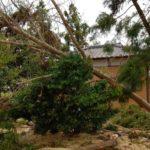 台風15号の爪痕。倒木の撤去を手伝う