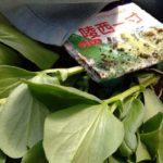 植えたいのにスペースが無い!ソラマメの植え付けとコンパニオンプランツ&冬野菜の様子